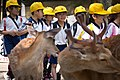 Primary school children and deer in Nara, Japan.jpg