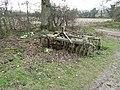 Primroses among thorns and harrow - geograph.org.uk - 1216596.jpg