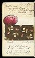 Printer's Sample Book (USA), 1882 (CH 18575251-45).jpg