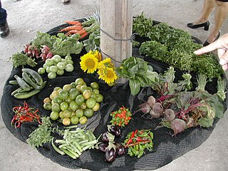 method of urban agriculture using organic fertilizers, drip irrigation and biological pest control originated in Cuba
