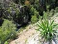 Prunelli (Gorges) JPG1.jpg