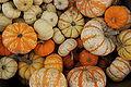 PumpkinVariety.jpg