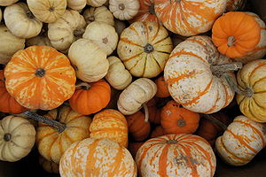 A variety of punpkins at the Portland Farmers ...