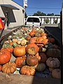 Pumpkins in Cullman, Alabama - 2019.jpg