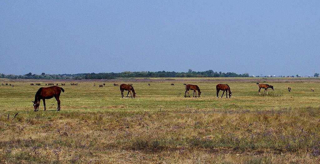 Pferde in der Puszta bei Gyula (Ungarn)