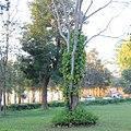 Pyin U Lwin, Mandalay Division 02 (cropped).jpg