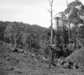 Queensland State Archives 344 Looking from the State Forest across Obi Obi towards Mapleton c 1931.png