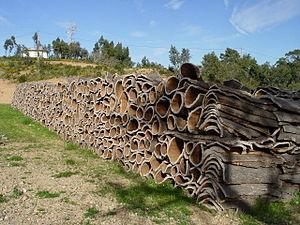 Harvested cork.