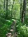 Quinebaug Trail north of Breakneck Road southern terminus.jpg