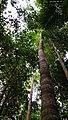 Rain forest 7.jpg