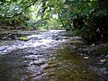 Rapids on the River Severn - geograph.org.uk - 532321.jpg