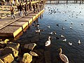 Rapperswil - Hafen - Bühlerallee 2012-01-15 16-22-41 (GT-I9100).jpg