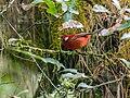 Redwarblerfoliage.jpg