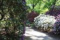 Rhododendronpark Bremen 20090513 129.JPG