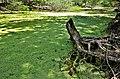 Rio Piauí - Bosque de Algarobas 05.JPG