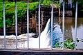 River dam.jpg