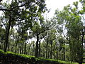 Road view to and from OOTY (178).JPG