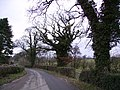 Roadside Trees - geograph.org.uk - 127341.jpg