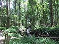 Robert Simpson Nature Trail 07.JPG
