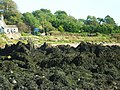Rocks covered in seaweed - geograph.org.uk - 1531579.jpg
