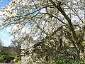 Rosemoor RHS Gardens - panoramio - PJMarriott (2).jpg