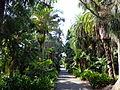 Royal Botanic Gardens Sydney 05.JPG