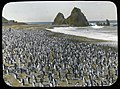 Royal penguins on Nuggets Beach.jpg