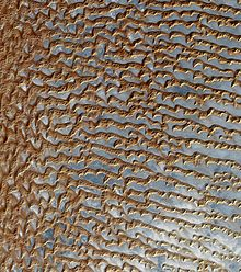 Satellite image of sand dunes in the Empty Quarter.