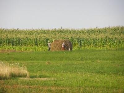 Rumunia rolnicy