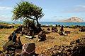 Sacred Stones near Sea Life Park (4574295854).jpg
