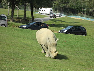 Safari park - White rhinoceros at Pombia Safari Park, Italy