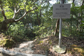 Sai Wan Fort Morning Trail - Unofficial Path 1.png