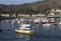 Santa Catalina Island, a rocky island off the coast of California LCCN2013634823.tif