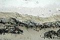 Sargassum-Syringodium-Thalassia buried in aragonite beach sand (North Point Peninsula, San Salvador Island, Bahamas) (15971071151).jpg
