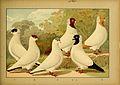 Schachtzabel 1906 Tafel 91.jpg