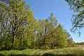Schleswig-Holstein, Borgwedel, Naturschutzgebiet Esprehmer Moor NIK 1794.jpg