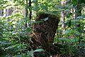 Schleswig-Holstein, Breitenburg, Landschaftsschutzgebiet Eichenwald Nordoe NIK 6388.JPG