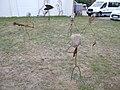 Schräge Vögel (Metall).JPG