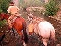 Scouting by horseback (7158046763).jpg