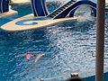 SeaWorld Orlando010.jpg