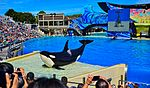 Sea World San Diego (26409742050).jpg