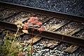 Seedy Side of the Tracks (1887854122).jpg