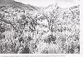 Sensitive plant species surveys, Butte District, Beaverhead and Madison Counties, Montana (1996) (19888246004).jpg