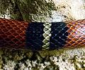 Serpent faux-corail Ile aux Serpents 191108 1.jpg