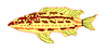 Serranus baldwini draft.PNG