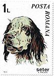 Setter-Canis-lupus-familiaris Romania 1971.jpg