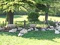 Shady sheep - geograph.org.uk - 184011.jpg