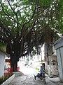 Shantou, Guangdong, China P1050155 (7477601734).jpg