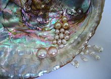 Shell and pearls.JPG