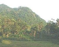 Sinharaja29.jpg